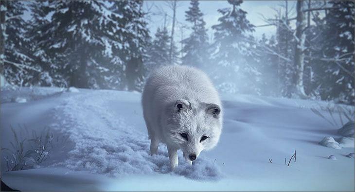 Fox?blur=25